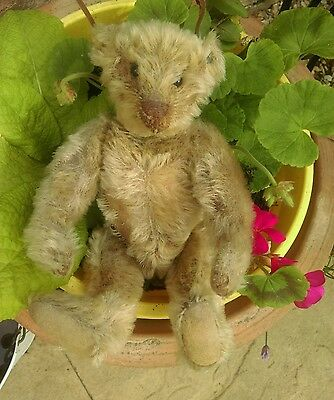 Antique early steiff teddy bear jointed mohair with button early 1900s