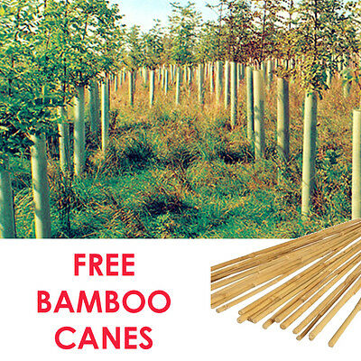 Tubex Tall Tree Shelters 90cm high x12cm wide with FREE BAMBOO CANES