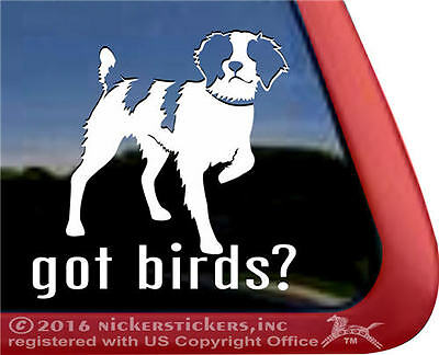 GOT BIRDS?  Pointing Brittany Gun Dog Vinyl Window Tablet Auto Decal Sticker