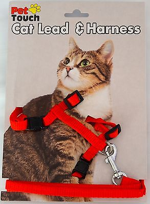 Red Cat lead and Harness Walk/Exercise