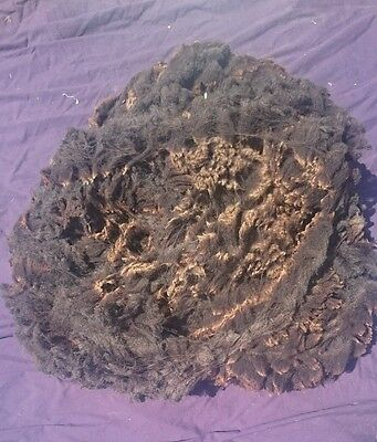 raw zwartbles x Charollais full fleece great for spinning, weaving, felting 2016