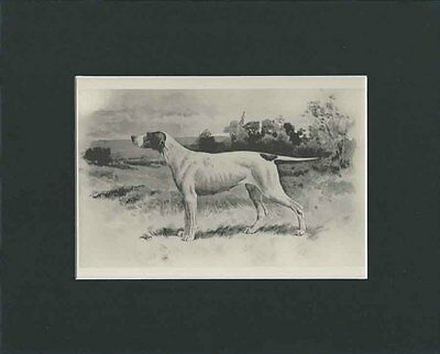 Antique Pointer Dog Print  by Arthur Wardle 1893 - Matted