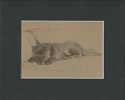 "Chow-Chow Dog by Cecil Aldin 1934 Relaxing 8X10"" Matted Sepia Print"