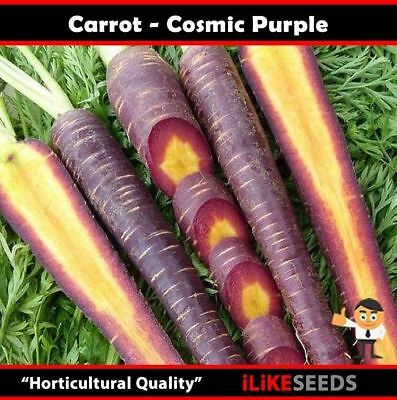 Carrot Cosmic Purple 100 Seeds Minimum. Vegetable Garden Plant. Heirloom Type.