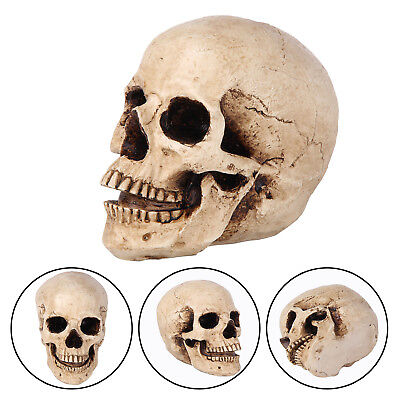Life Size Replica Real Human Skull Gothic Halloween decoration Ornament Party