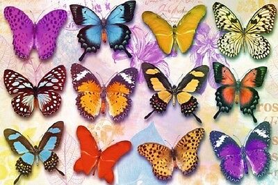 "BUTTERFLIES POSTER ""LICENSED"" BRAND NEW ""LARGE 61 cm X 91.5 cm"""