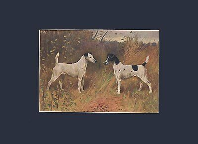 Antique Print 1907 Print Fox Terrier Dogs by Arthur Wardle Matted 9X12