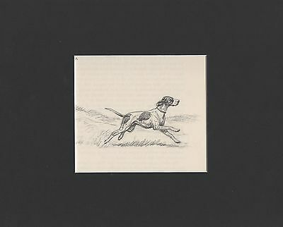 Vintage Edwin Megargee Pointer Dog W Game Print 1953 Matted