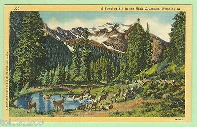 "Vintage 1937 Linen PC ""A Band of Elk in the High Olympics, Wash."" db/up"
