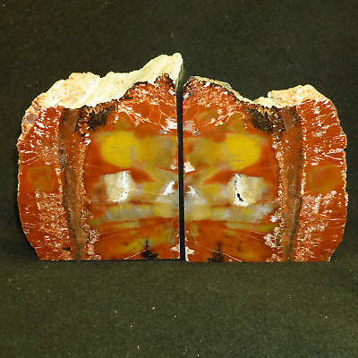 Exquisite Awesome HANDMADE ARIZONA Rainbow Petrified Wood BOOKENDS OVER 10 lbs!