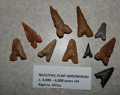 10 Ancient Neolithic Stone Arrowheads Algeria  4,000-6,000 years old