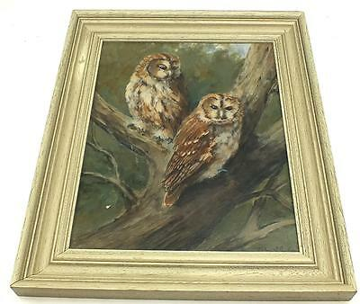 20thC Portrait Oil Painting - Tawny Owl - Bird Wildlife Picture - John Stephen