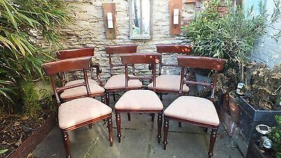 6 William IV th  style  mahogany dining chairs