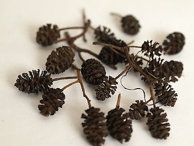 Alder Cones  x 100 / Low Ph / Tannins/ Anti-bacterial / Natural/ Shrimps/ Fish