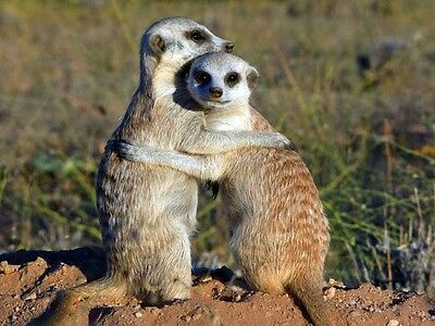 Meerkat Movies 2 For 1 Cinema Tickets Voucher Code Tuesday 6th Wednesday 7th Dec