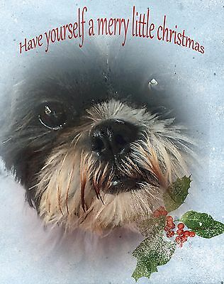 SHIH TZU CHRISTMAS CARDS  package of six  HOPE YOUR CHRISTMAS IS A SWEET ONE