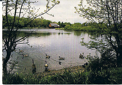 Postcard The Lake Llandrindod Wells 1999