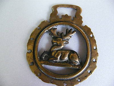 Cast BRASS HORSE BRASS Lying Stag in pierced Surrounds