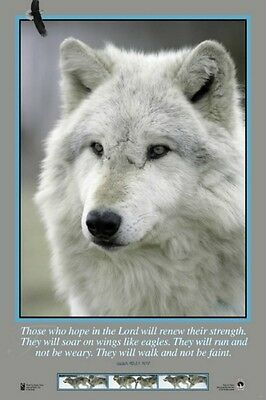 "White Christmas Wolf Gray Wolf 24 X 36"" 4 Color Poster! Monty Sloan Photos"