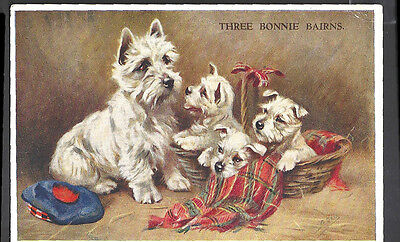 West Highland White Terrier Dog w Puppies  Mable Gear TARTAN Postcard PM 1939