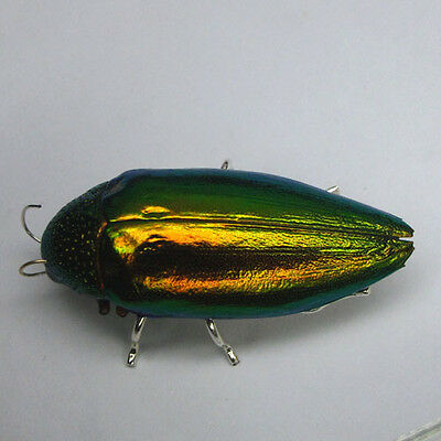 .Natural Beetle Wing Green Red Brass Pin Brooch  #Sr