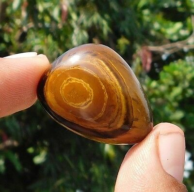 55.05 Cts 100% Natural Gorgeous Yellow Tiger Eye 31X22X9 Mm Cabochon Gemstone