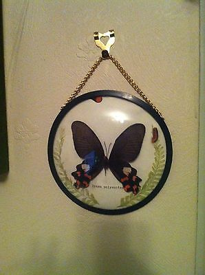 REAL BUTTERFLY in perspex round case on chain PICTURE vintage retro