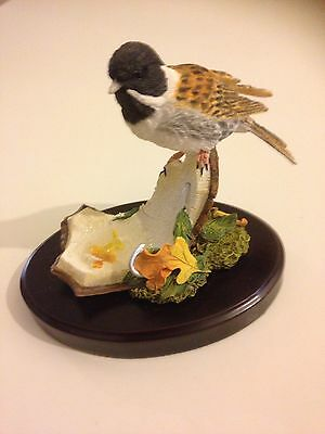 Boxed New Broadway Birds Reed Bunting On Broken Coconut Country Artists