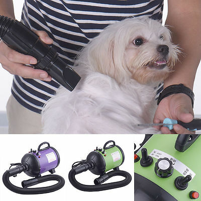 Quickly Dry Pet Dog Grooming Force Dryer Winter Anion Mute Electrical Hair Dryer