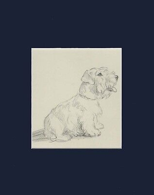 Cute Sealyham Terrier Puppy Dog 1946 Print BY LUCY DAWSON 8 X 10 Matted