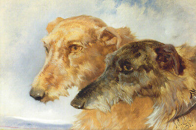 Scottish Deerhound Dog 1851 by  John F. Herring ~ LARGE New Blank Note Cards