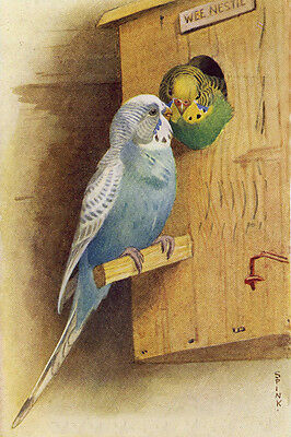 Vintage Bird Parakeets Budgies In Nesting Box by Spink ~ New  Large Note Cards