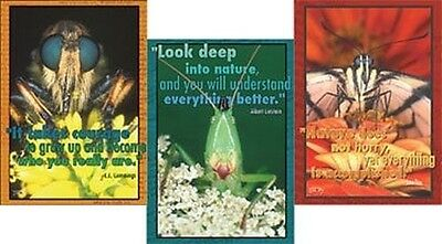 Set of 3 Inspiring Insects Posters 19 x 27