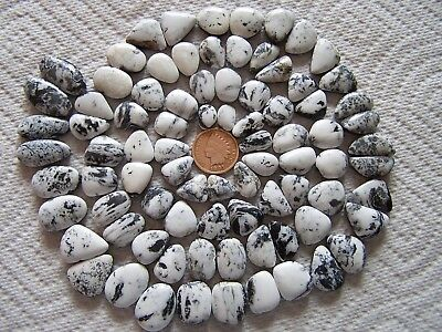 84 Natural White Buffalo Turquoise 630 carat Cabochons Matching Sets Cabs Nevada
