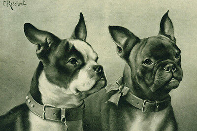 Boston Terrier & French Bulldog Carl Reichert Drawing New  Large Note Cards
