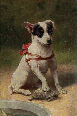 Jack Russell Terrier Puppy Dog vs Turtle REICHERT   LARGE New Blank Note Cards