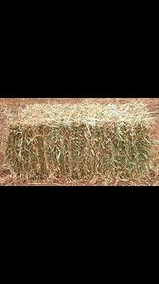 Rye and Oaten Hay Small Squares