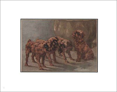 Antique Brussels Griffon Dogs Print by Maud Earl 1912 8x10 Matted
