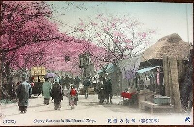 Vintage Japanese Post Card - Cherry Blossoms in Mukojima, Tokyo. ( Lot 21 ).