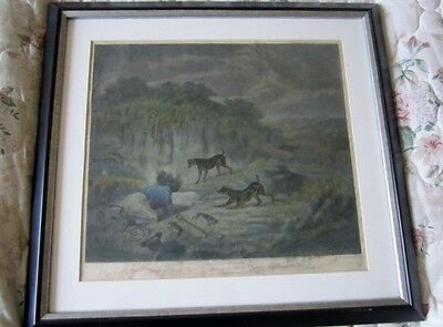 Antique coloured engraving Ferriting Rabbits (sic) by Dean Wolstenholme (Junior)