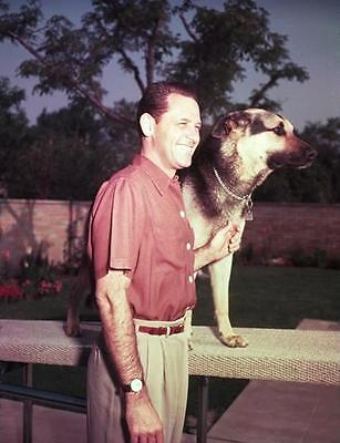 William Holden Lovable  With Dog  8X10 Photo 293