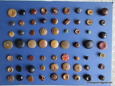 3855 – 63 Vegetable Ivory Buttons-Boutons Old Collector Card, 1 Foil Under Glass