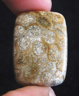 30.15Cts A+ 100% Natural Wonderfull Fossil Coral 27X19X6 mm  Loose Gemstone