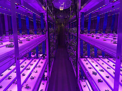 Shipping Container Indoor Hydroponic Farm / Business