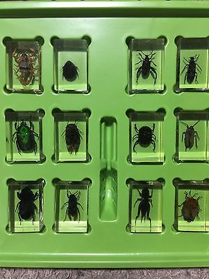 REAL INSECTS BUGS PAPERWEIGHT! IN acrylic resin 12 pieces!