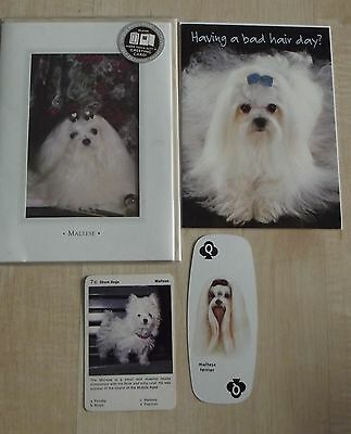 MALTESE TERRIER new greeting cards,playing / swap cards,dog collection