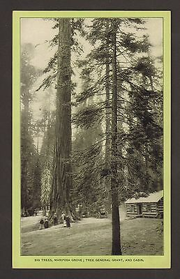 """Giant Trees - Sequoia - Singer Sewing Machine - Trade Card Photo - """"singer 66"""""""