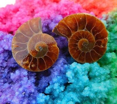 36 Cts. 100% Natural Matched Pair Of Ammonite Shell  Mineral Specimen (NH77)