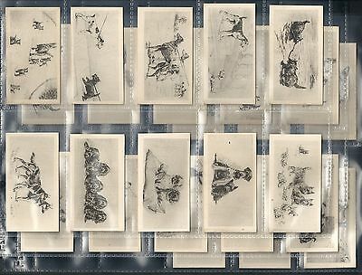 British American Tobacco, Etchings (Of Dogs) Set Of 26, Issued In 1926.
