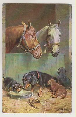 Dachshund dogs with horses.Vintage postcard ~ 1925